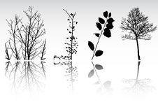 Tree  clipart collection Stock Photography