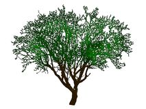 Tree with clipping path. Isolated tree with clipping path over white vector illustration