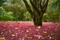 Tree closeup in autum foliage Royalty Free Stock Image