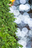 Tree closeup. Background lights bokeh. Stock Images