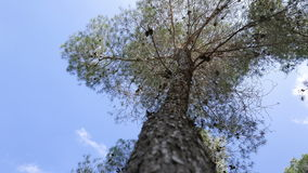Tree closeup on blue sky stock footage