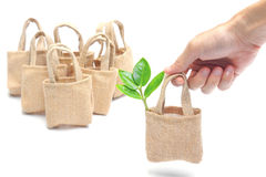 Tree in a cloth bag Stock Images