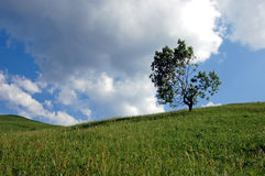 Tree in clouds. Tree on a glade, against clouds before a thunder-storm Stock Photos