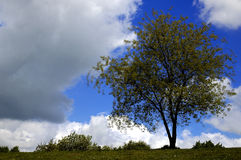 Tree and clouds royalty free stock image