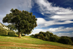 Tree and clouds Stock Photos