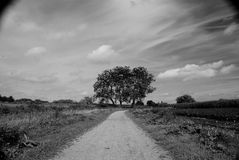 Tree and Clouds. A black and white tree in the Dutch landscape Stock Photos