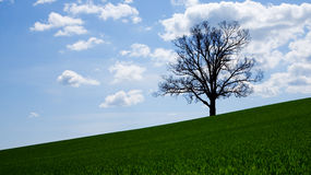 Tree with clouds. Royalty Free Stock Photography