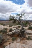 Tree. And Clouds, Arches National Park, Utah Royalty Free Stock Photo