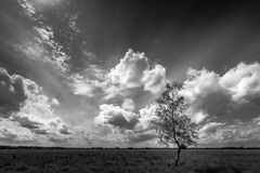 Tree & clouds. Black and white landscape in the Netherlands Royalty Free Stock Images