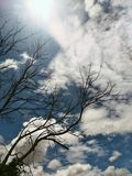 Tree  and  Clouds Royalty Free Stock Photo