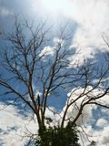 Tree  and  Clouds Stock Photography