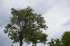 A tree and the clouds-Stock Photos. A majestic tree contrasting with the clouds Stock Image