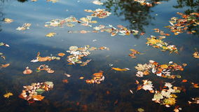 Tree and clouds is reflected in the autumn lake. 4K. Tree and clouds is reflected in the autumn lake. Colourful leaves on lake surface. 4K stock video footage