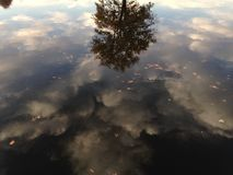 A Tree and Clouds Reflection in a Pond Surface with Dry Leaves in the Fall. Stock Photography