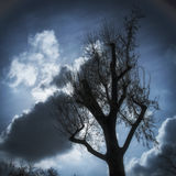 Tree and clouds in the sky Stock Image