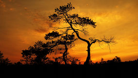 Orange sky and trees at sunset  Stock Photography