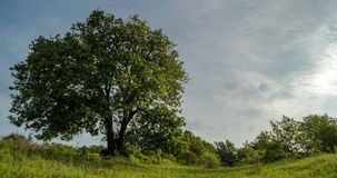 Tree and clouds time lapse. A time lapse of a tree with clouds passing over on late spring or early summer day stock footage
