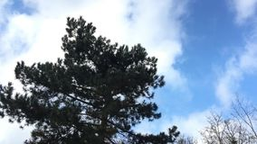 Tree and Clouds Time Lapse stock video footage