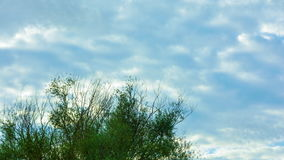 Tree and clouds time lapse video stock footage