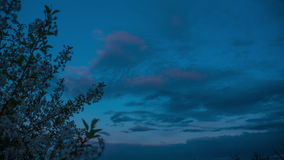 Tree and clouds in timelapse clouds float across the sky, time lapse sunset, flowering tree against the sky with clouds. Spring landscape garden trees bloom stock footage