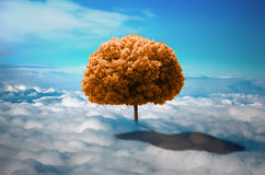 Tree in the clouds. Trees in the clouds. Lonely tree growing on the meadow from the clouds. ecological concept. photo manipulation. Autumn tree in yellow Stock Image