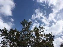 Tree, cloudy blue sky. Vladivostok countryside, nature Royalty Free Stock Photos