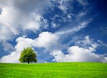 Tree and cloudy sky Stock Photos