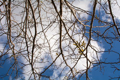 Tree on cloudy sky. Tree on winter cloudy day Stock Photos