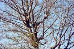 Tree cluster Stock Photo