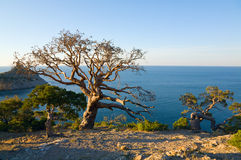 Tree and coast Royalty Free Stock Photos