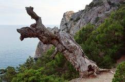 Tree and coast Stock Photo