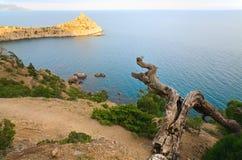 Tree and coast Stock Photography