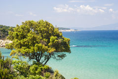 Tree on coast of Aegean sea (Greece) Royalty Free Stock Image