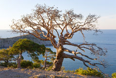 Tree and coast and evening Stock Photography
