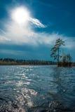 Tree on lake Stock Images
