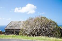 Tree by Coastal Brick Building Royalty Free Stock Image