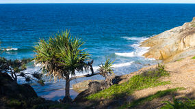 Tree and coastal vegetation against ocean Royalty Free Stock Images