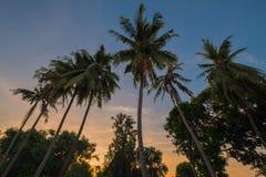 Tree coconut. Backlit sun, sunset Stock Photo