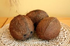 Tree coconuts on knit underlay Stock Images
