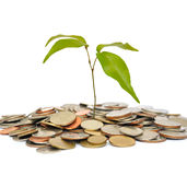 Tree on coin Stock Images