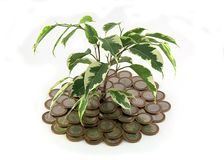Tree coins Royalty Free Stock Image