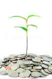 Tree on coins Royalty Free Stock Image