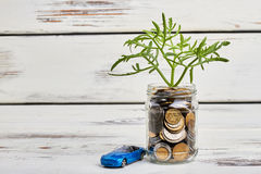 Tree and coins in container. Stock Photo