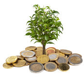 Tree and coins isolated Stock Photo