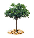 Tree and coins Royalty Free Stock Images