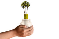 Tree coins and jar in human hand Royalty Free Stock Photo