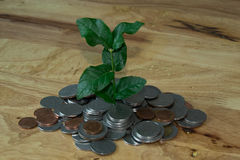 Tree in coins mound Stock Photo