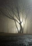 Tree is in cold light Royalty Free Stock Images