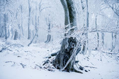 Tree in the cold winter forest covered with frost Royalty Free Stock Photography