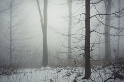 Tree in cold winter forest with fog and snow royalty free stock photography
